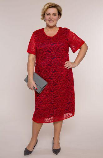 Czerwono granatowa koronkowa sukienka krótki rękaw